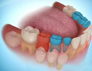 function teeth hinh-1.jpg?w=300&