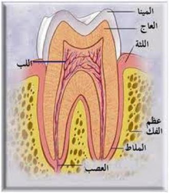 الاعتناء بالأسنان خلال الحمل untitledsf.png